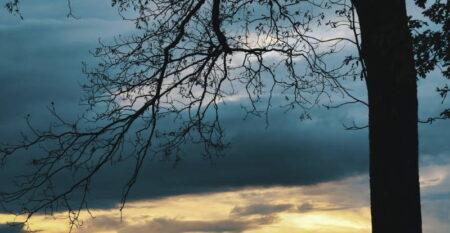 Δέντρο, φύση