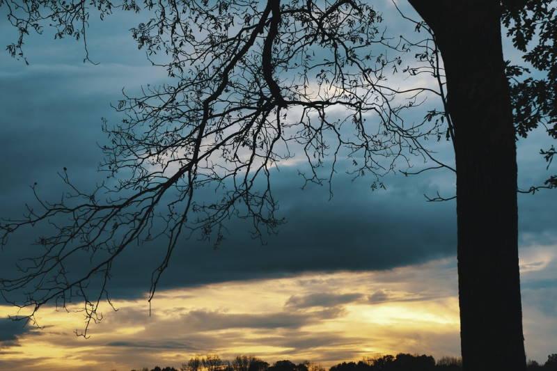 tree-nature-01